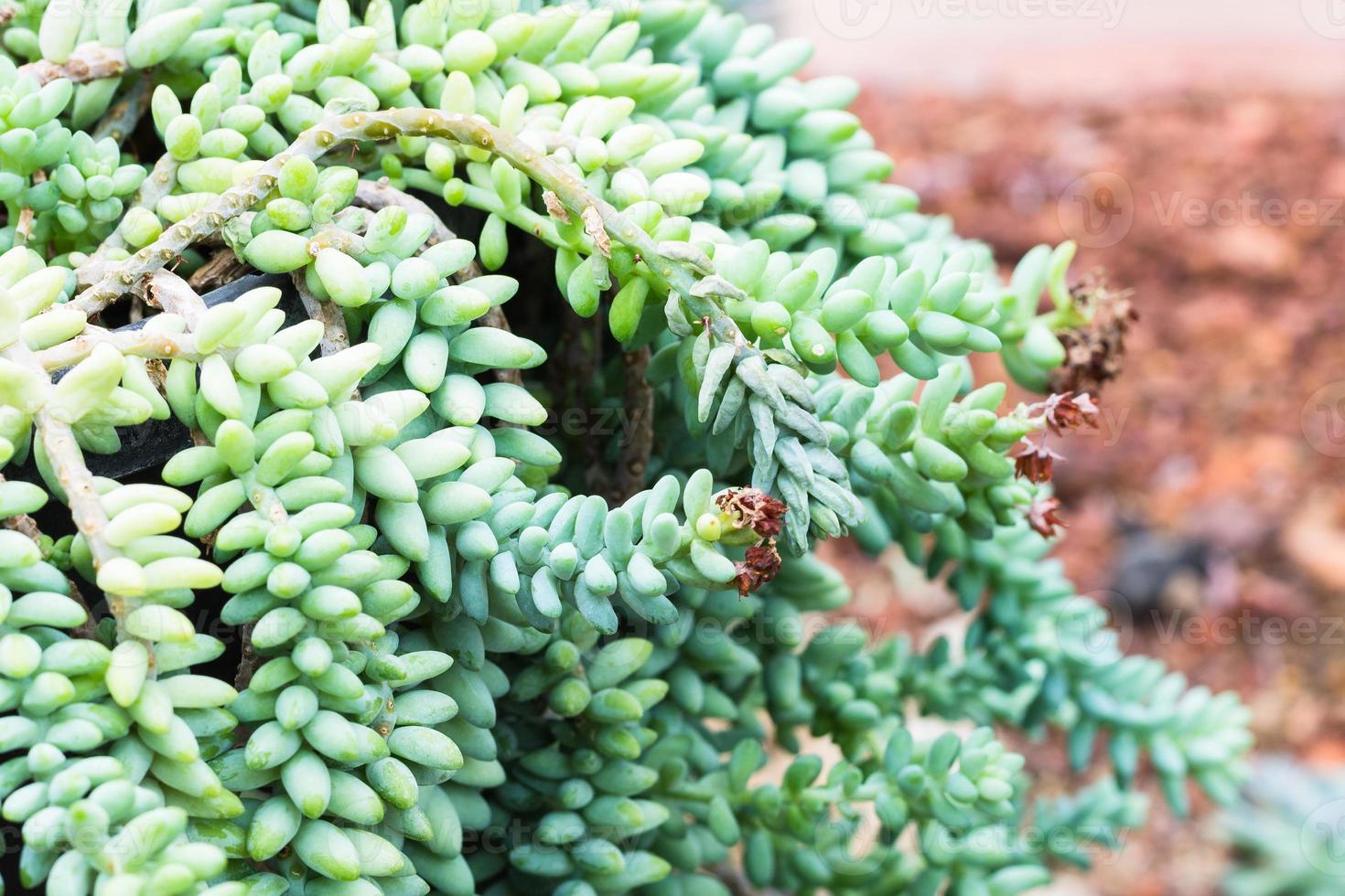 cactus su sfondo di roccia foto