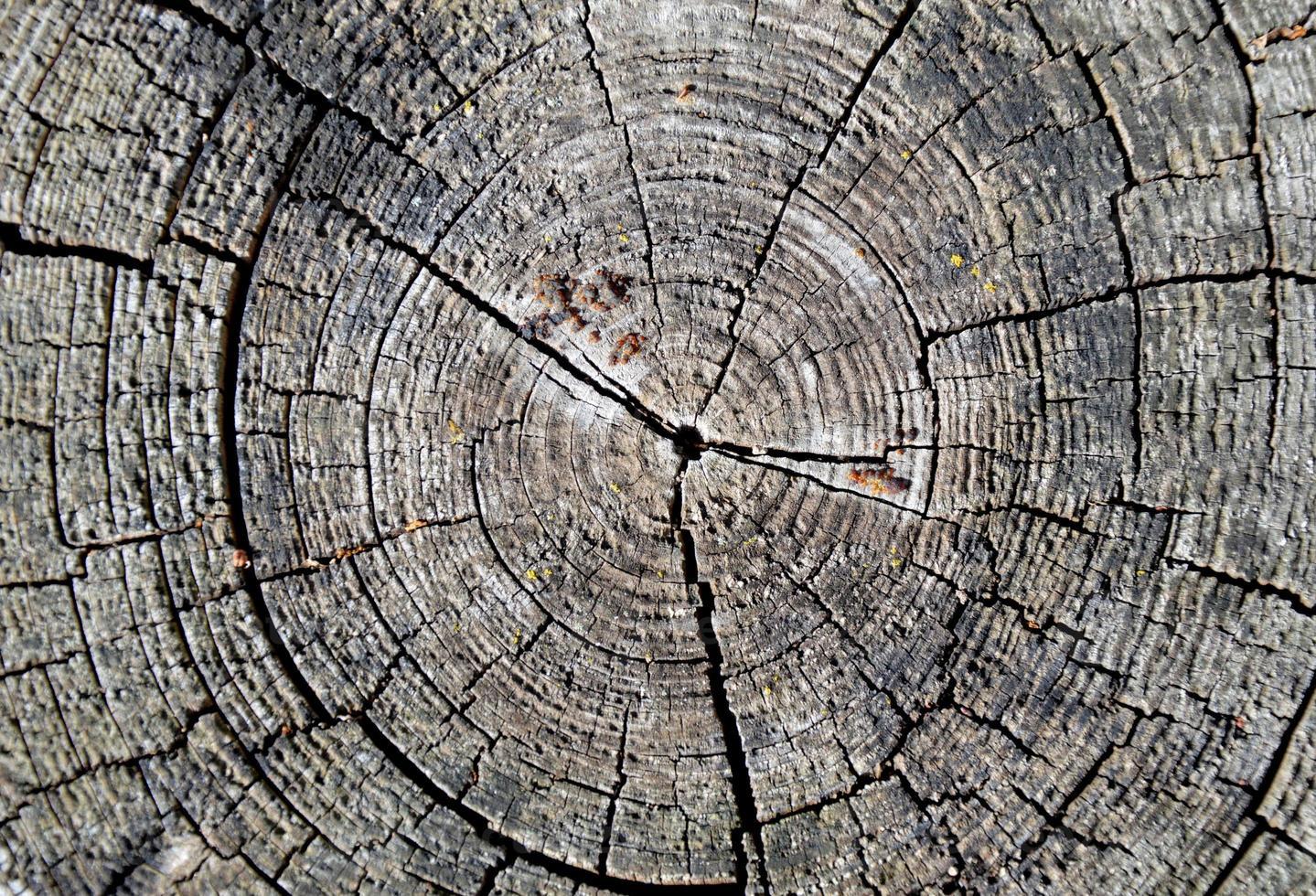 anelli degli alberi foto