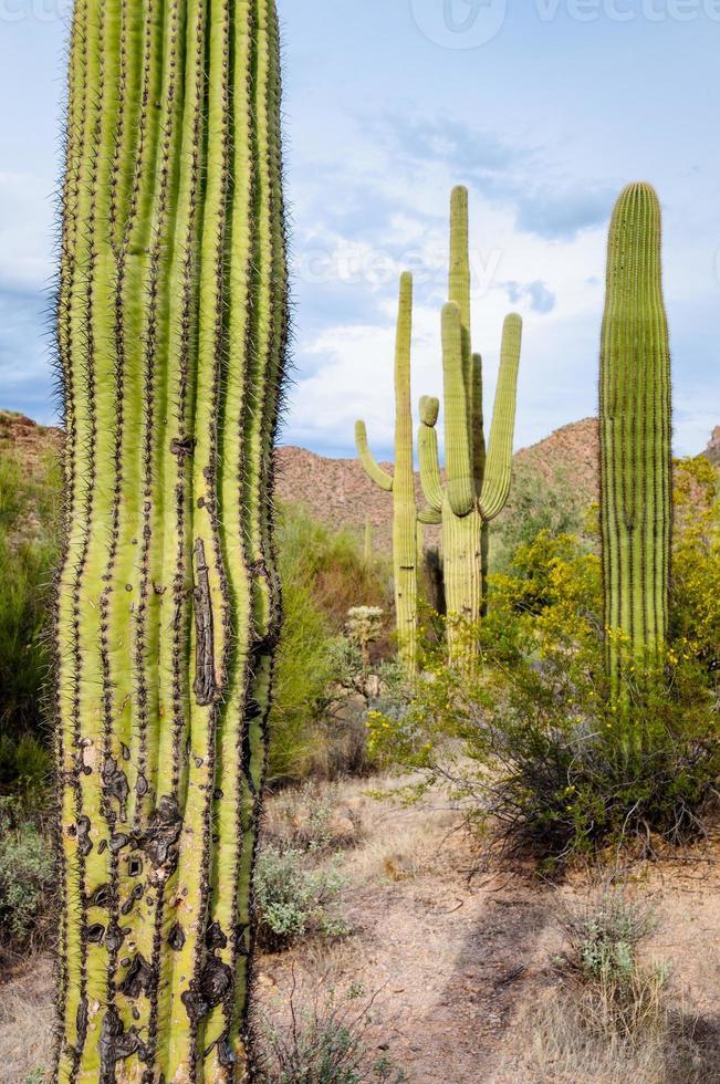 parco nazionale del saguaro foto