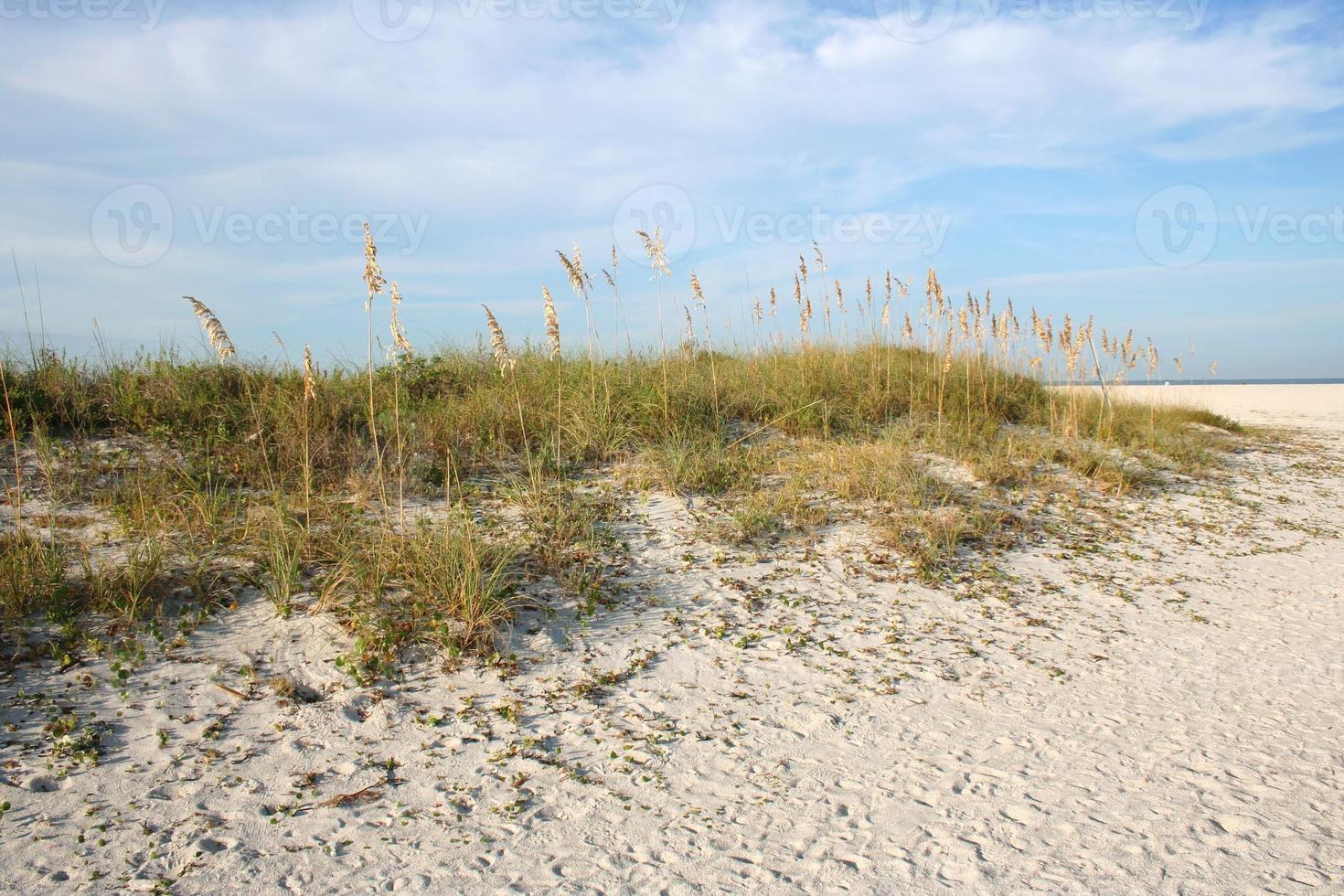 duna sulla spiaggia foto