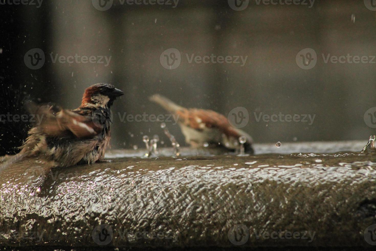 ave en el tiempo foto