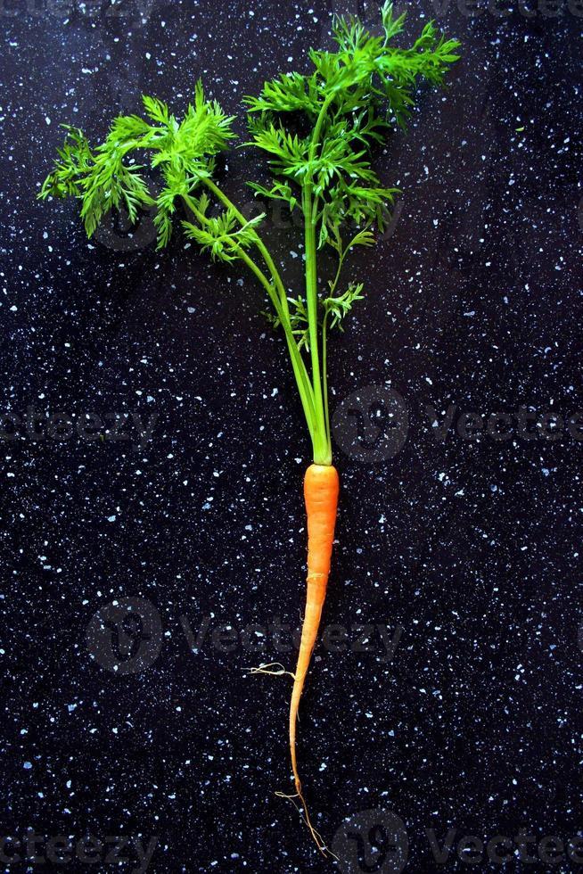 la carota foto