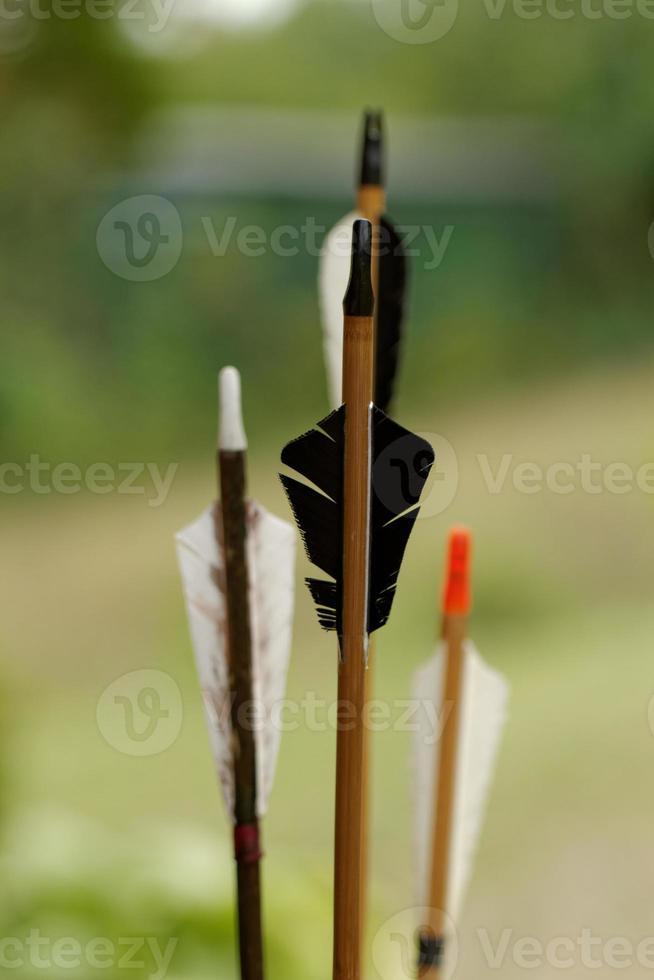 frecce in natura foto