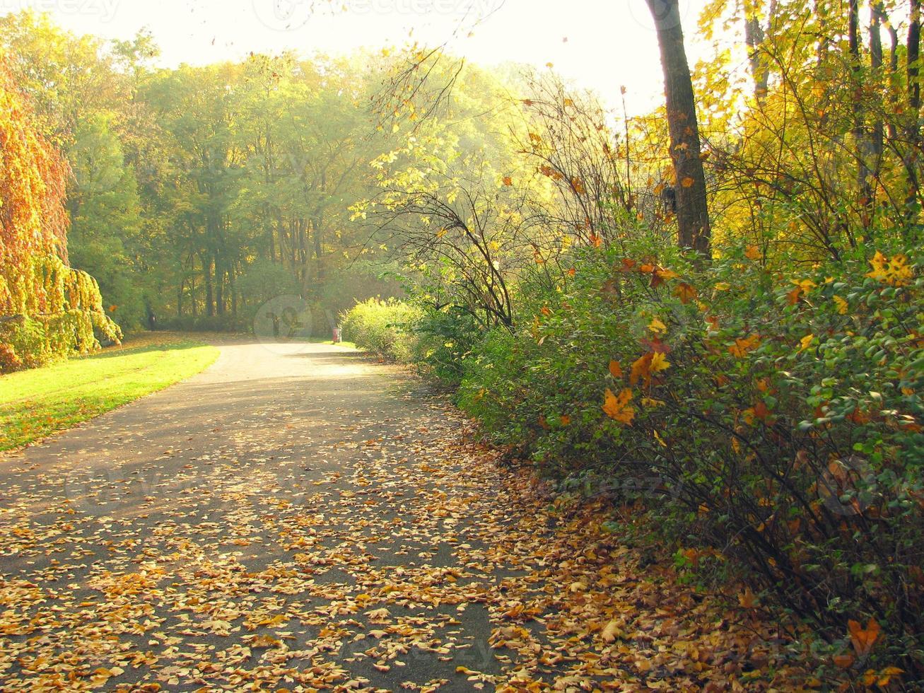caduta delle foglie foto