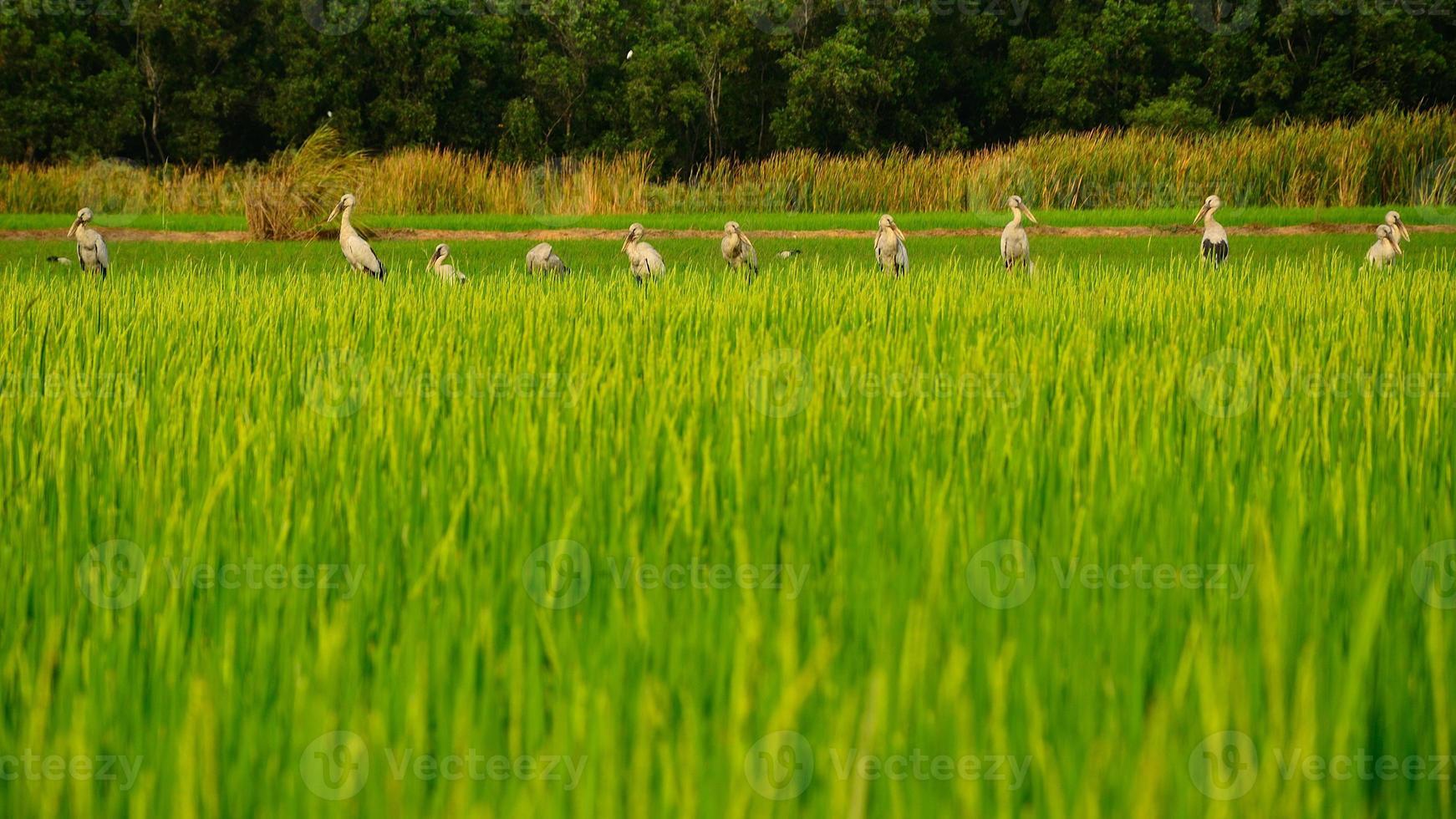 fila di uccelli foto