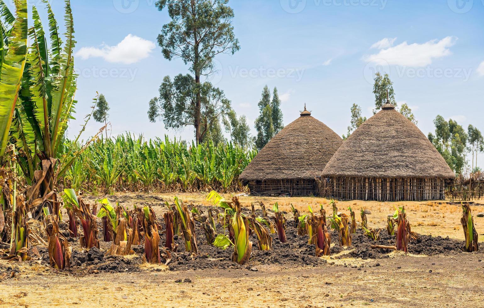 case tradizionali del villaggio in Etiopia foto