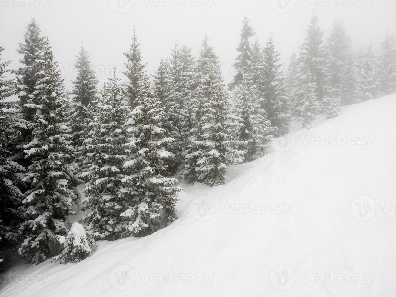 alberi coperti di neve nella nebbia foto