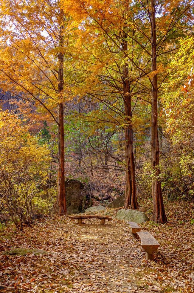 panchina della foresta d'autunno foto