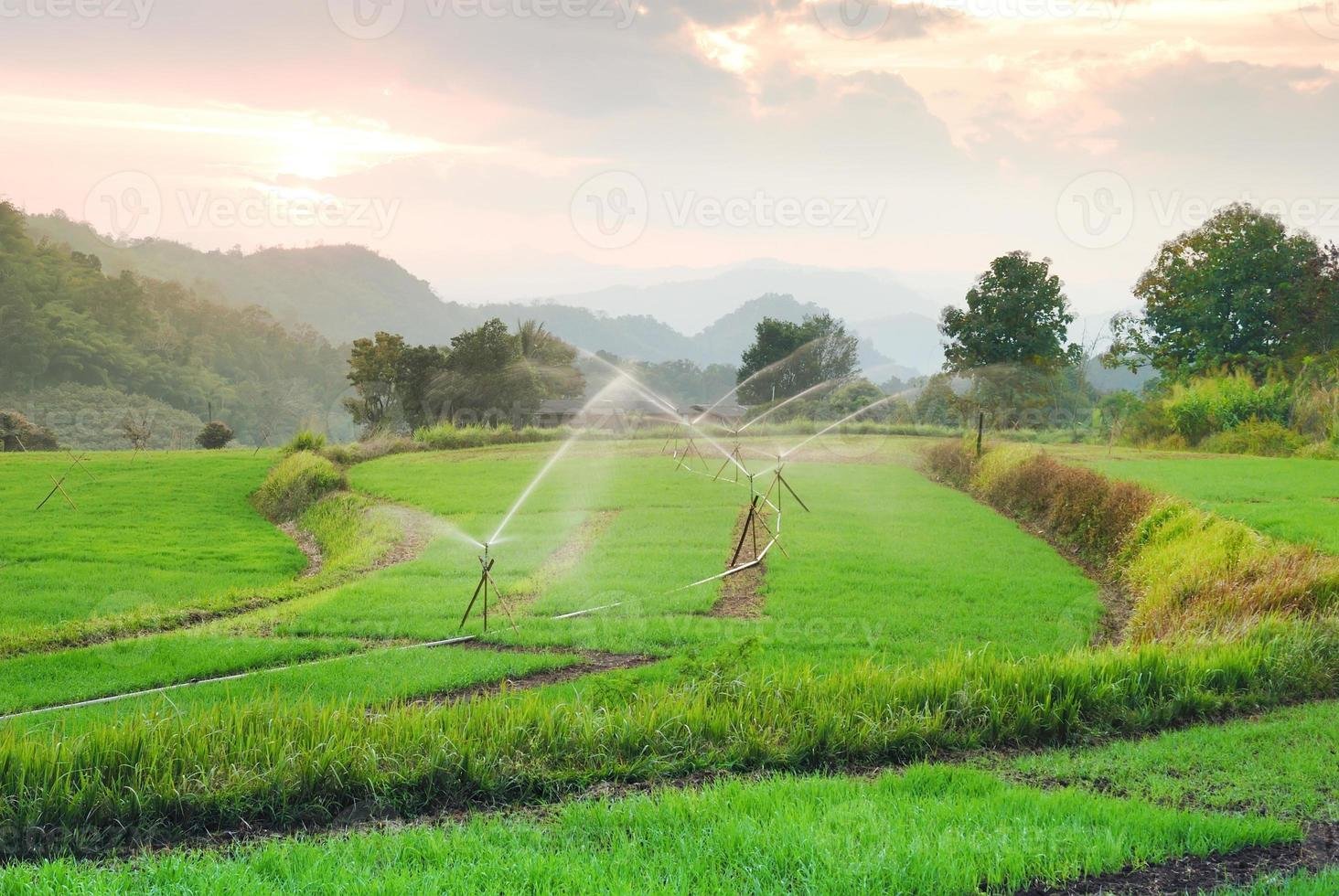 Giacimento del riso del terrazzo di paesaggio in chiangmai Tailandia foto