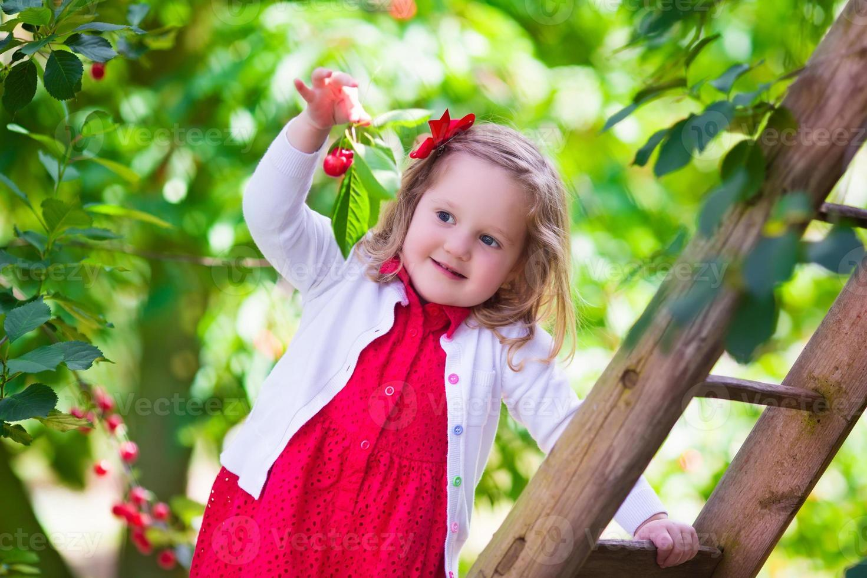 bambina dolce che raccoglie la bacca fresca della ciliegia nel giardino foto