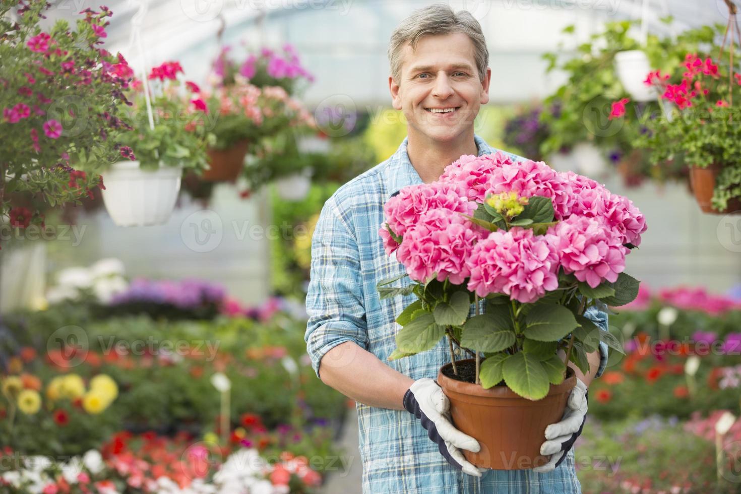 Ritratto di felice giardiniere azienda vaso di fiori in serra foto
