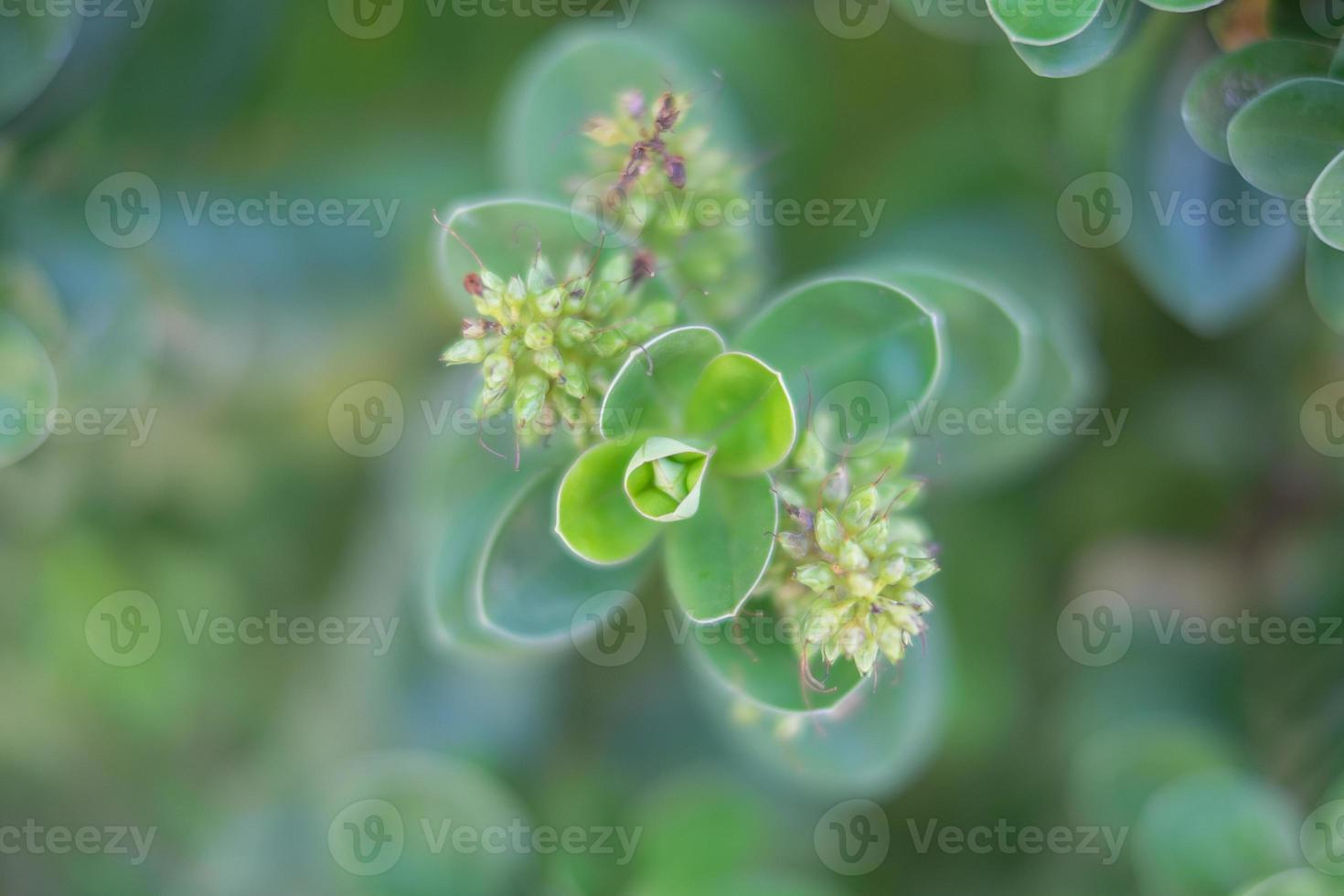 cespuglio di fiori foto