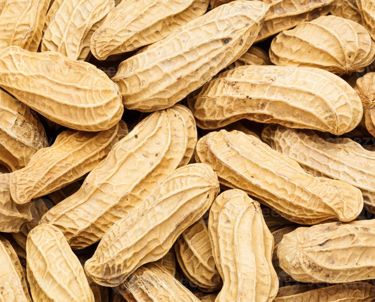 arachidi da vicino foto