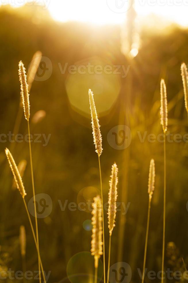 i fiori di campo si chiudono foto