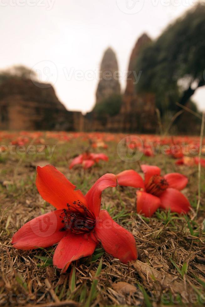 Thailandia Ayutthaya Wat Ratburana foto