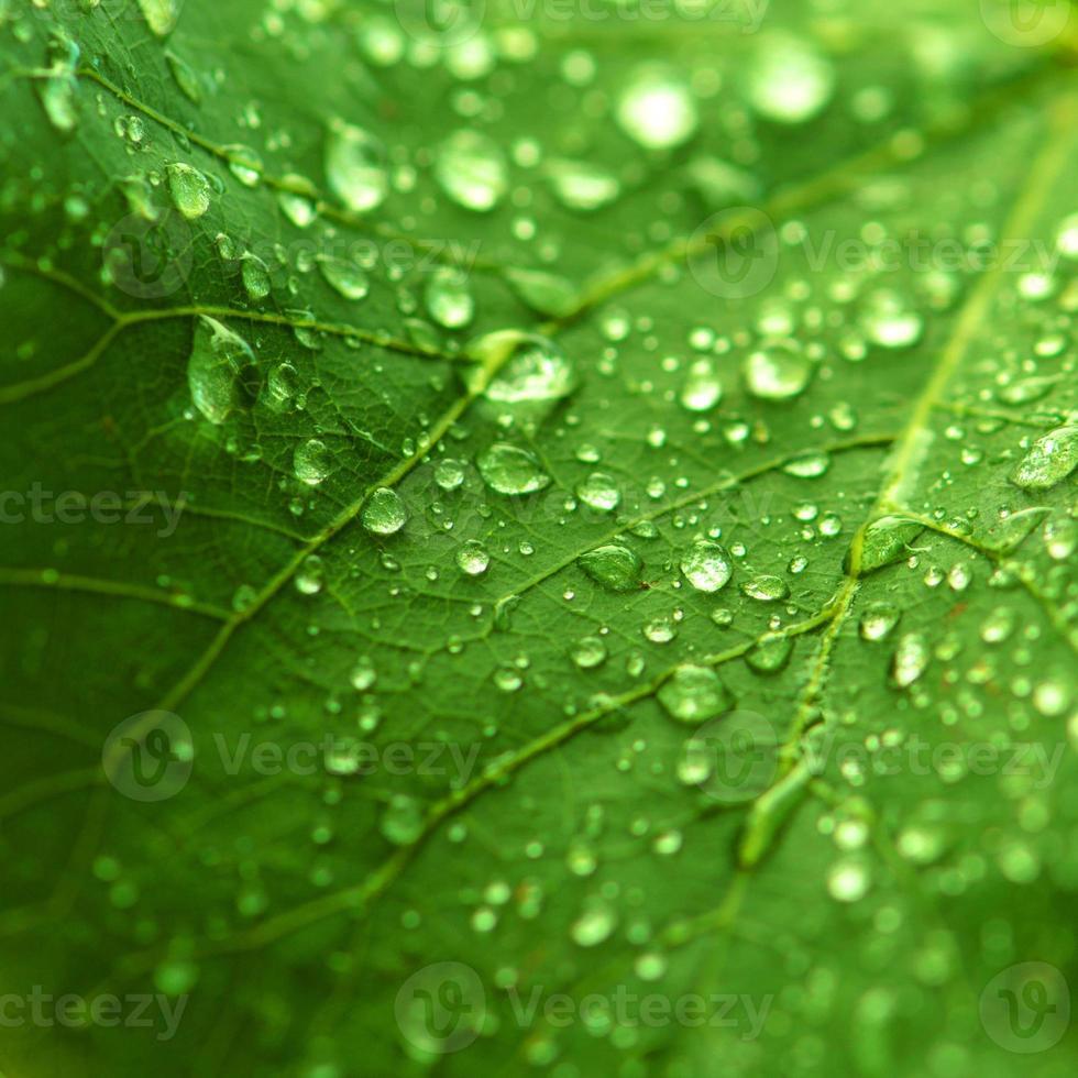 freschezza verde foto