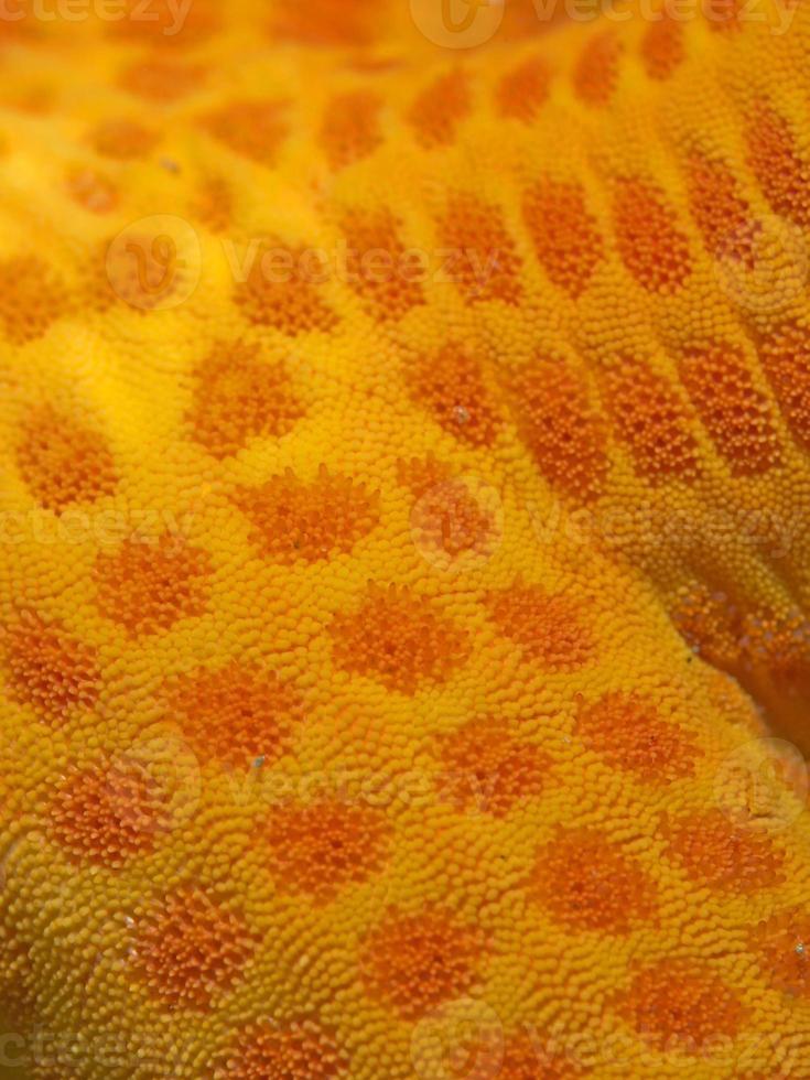 pesce stella da vicino foto