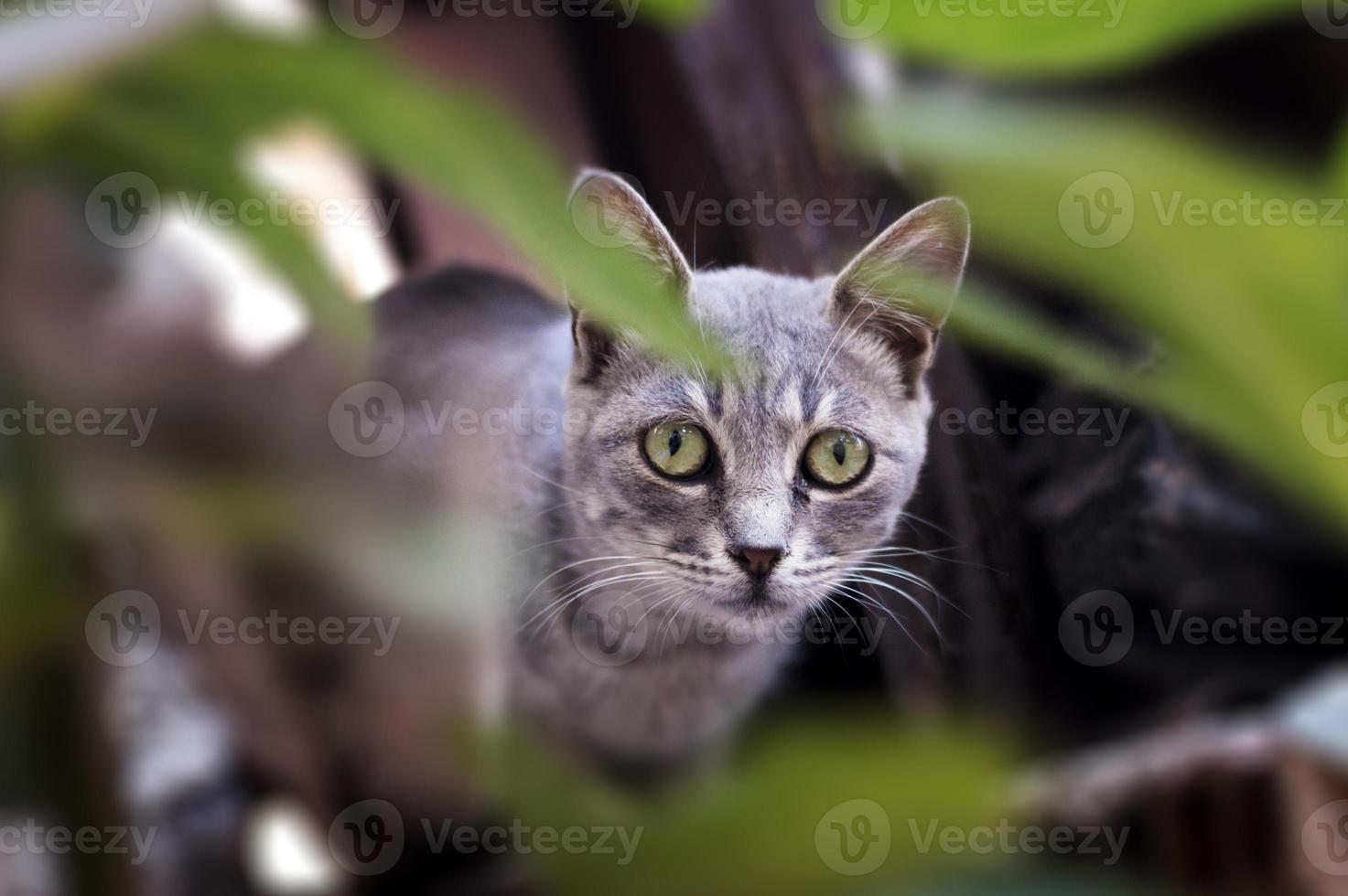 ritratto di gatto. foto