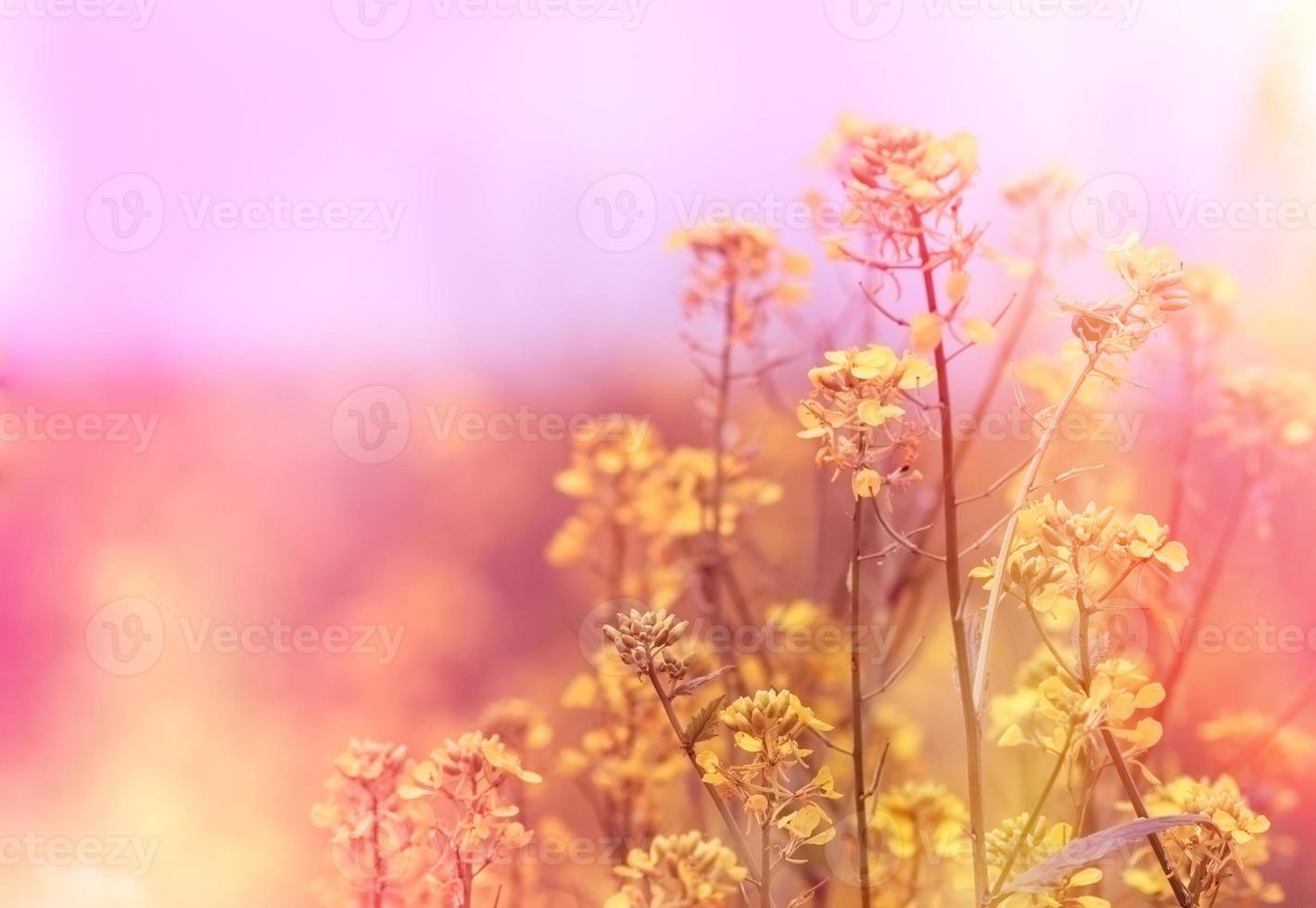 fiori gialli (fiore selvaggio) foto
