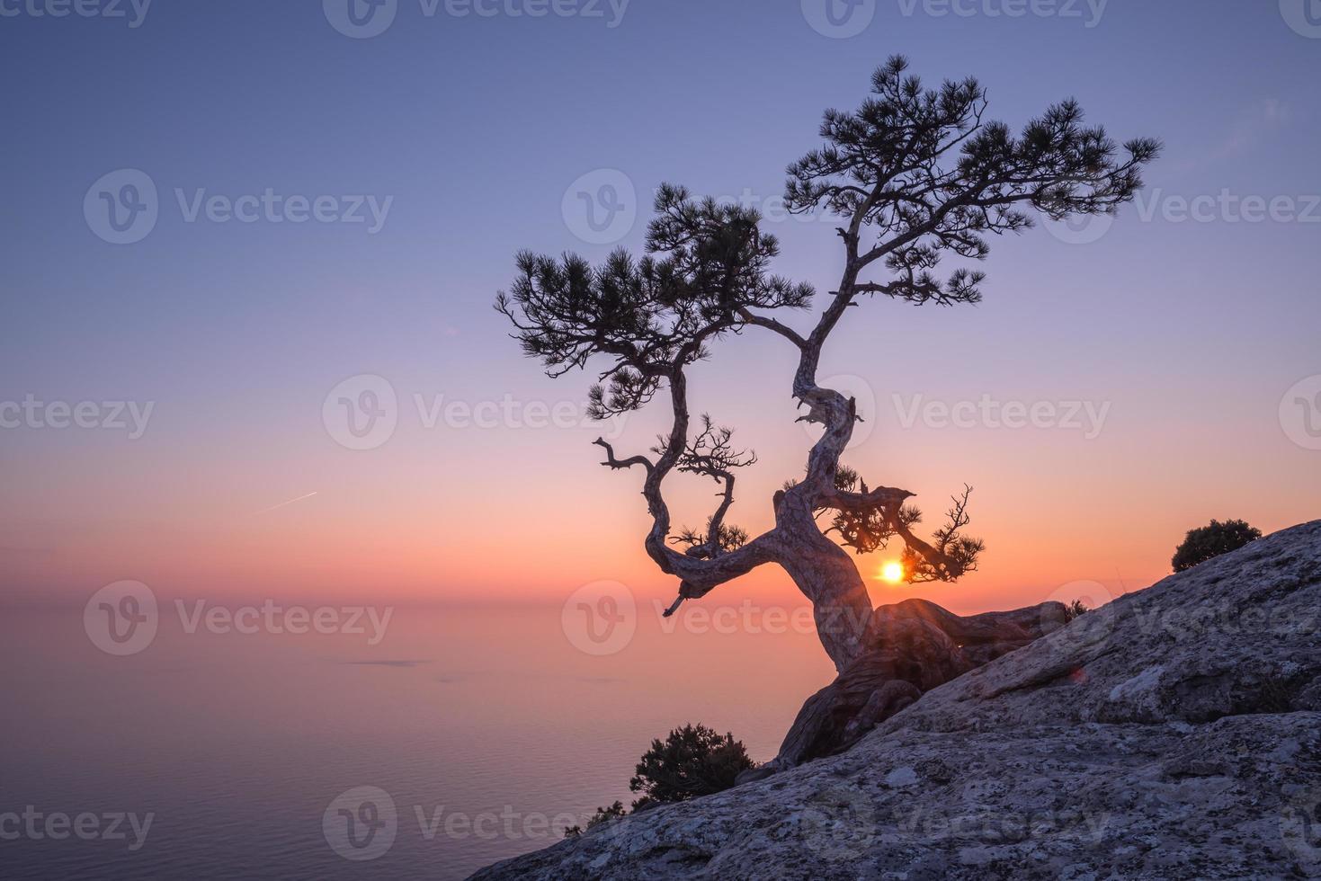 albero foto