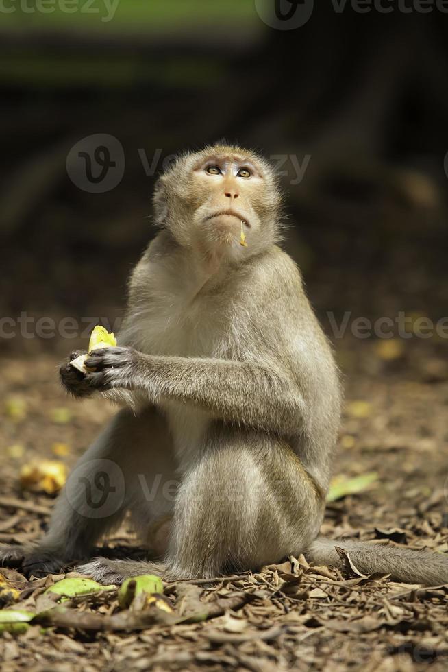 scimmia foto