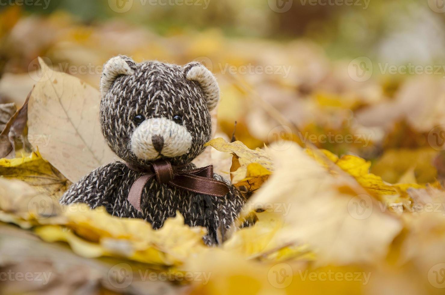 colore marrone dell'orsacchiotto che si siede sulle foglie di autunno. foto