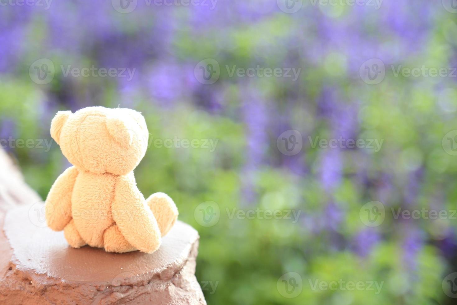 bambola dell'orso in sfondo sfocato foto