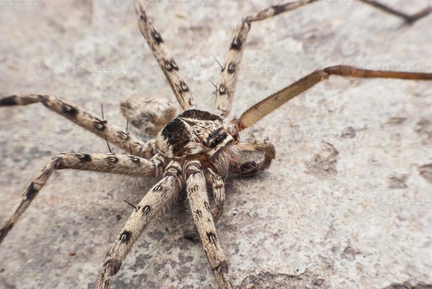 ragno del primo piano foto