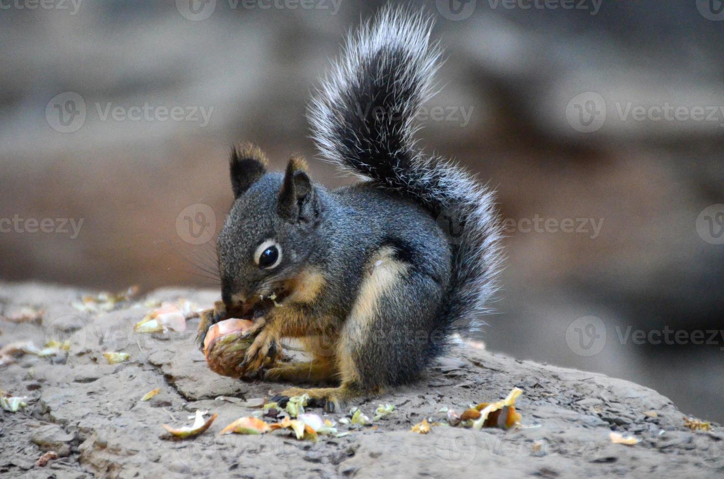 scoiattolo a terra ricoperto d'oro foto