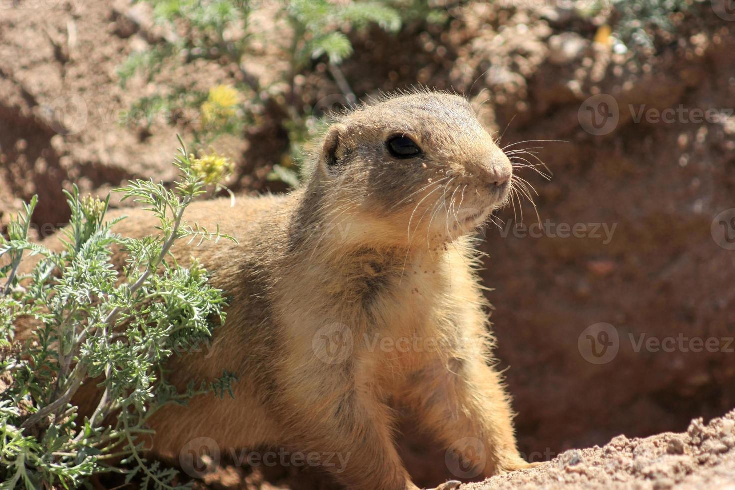 animali del New Mexico foto