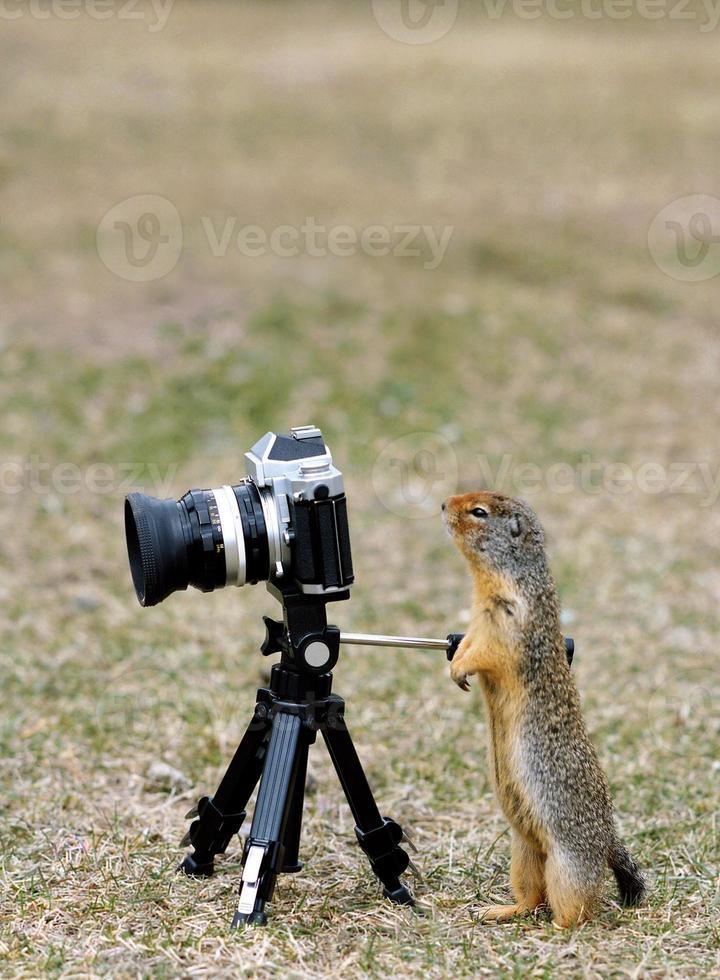 scoiattolo a terra in piedi guardando attraverso il mirino della fotocamera foto