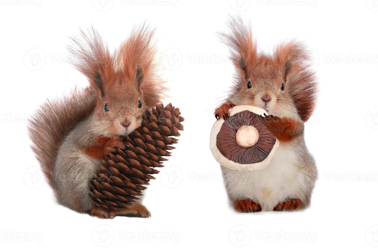 scoiattolo foto