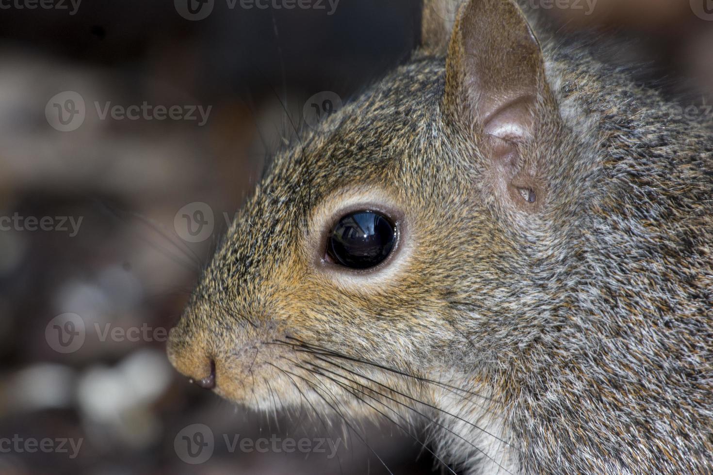 ritratto di scoiattolo foto