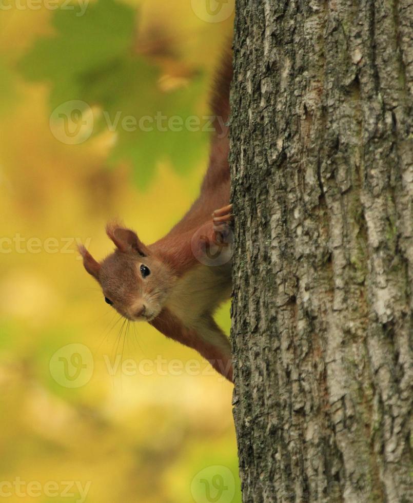 scoiattolo giocoso foto