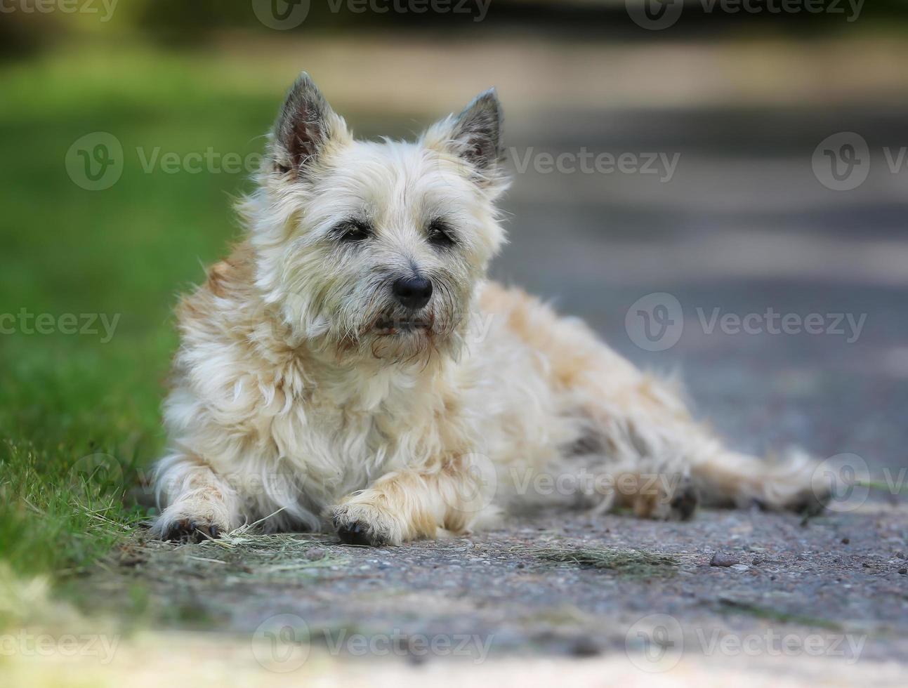 cane sdraiato nell'ombra foto