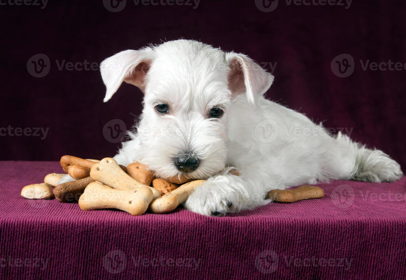 cucciolo con ossa di biscotti per cani foto