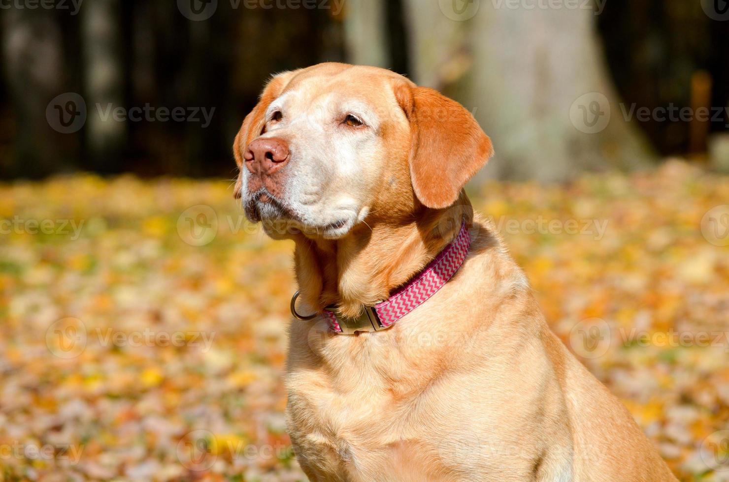 cane in autunno foto