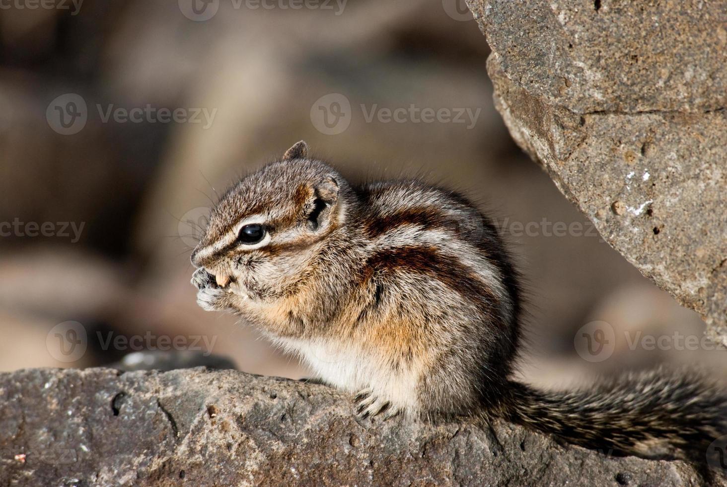 scoiattolo che mangia un seme foto