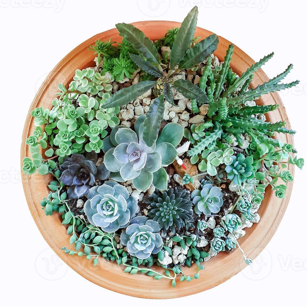 vaso succulento su sfondo bianco foto