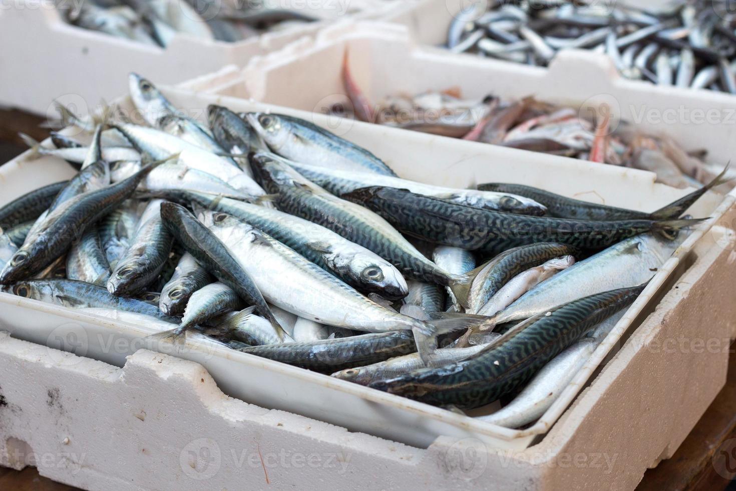 sardine fresche foto