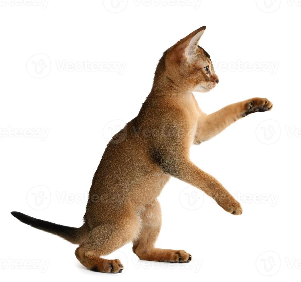 gattino carino isolato su sfondo bianco foto