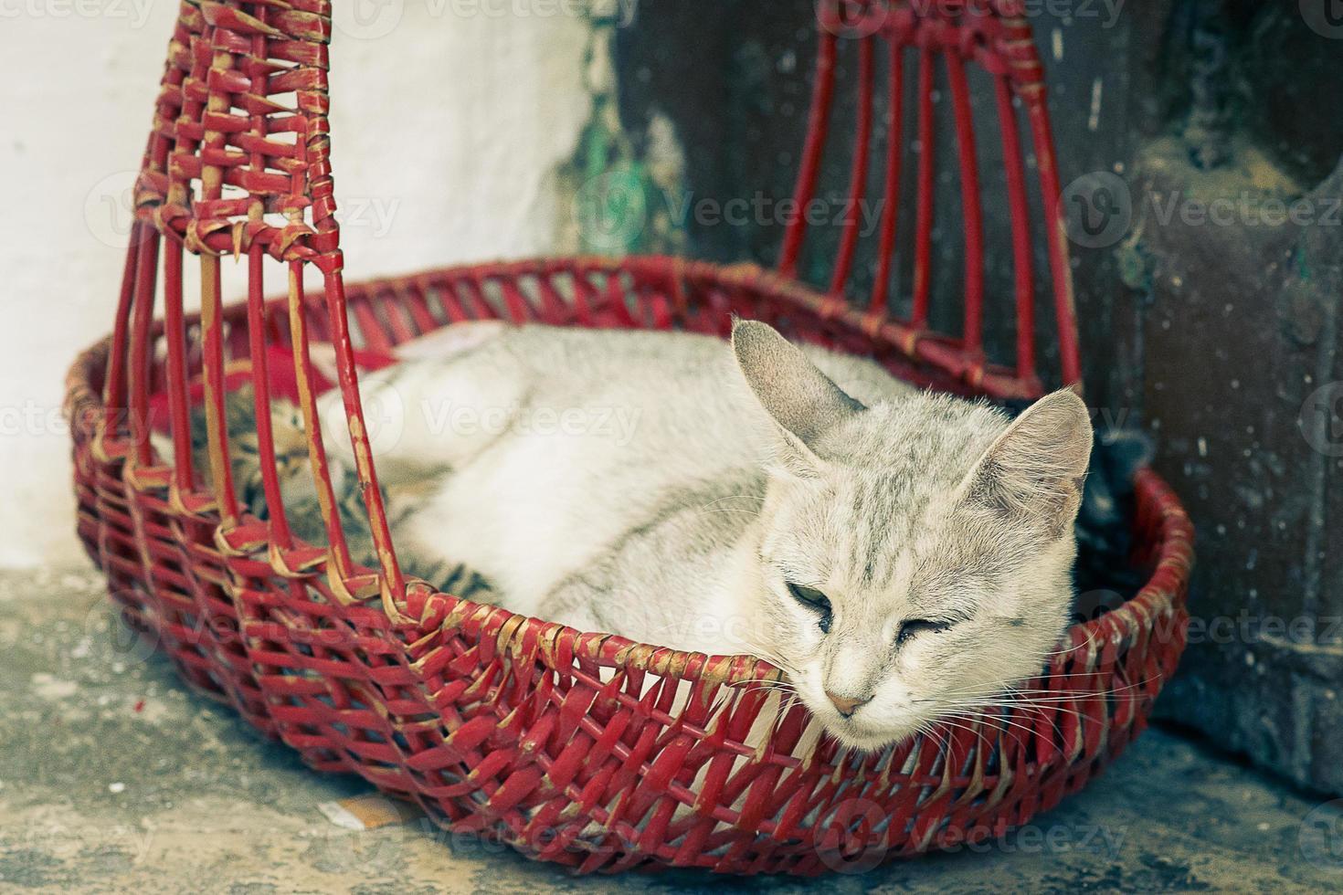 mamma gatta con gattini foto