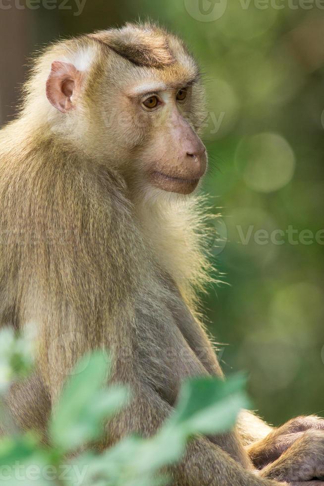 la scimmia foto