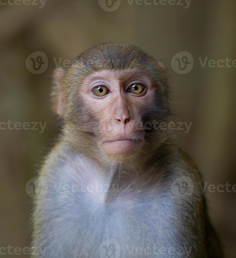 faccia di scimmia foto