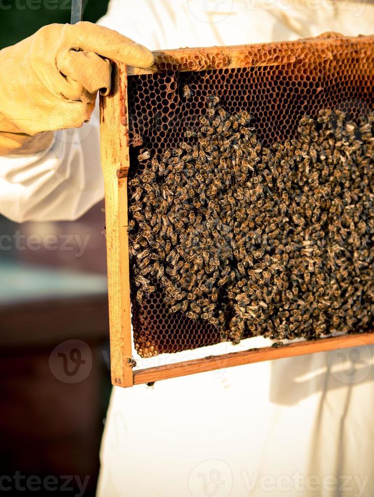 cornice di apicoltura con api foto