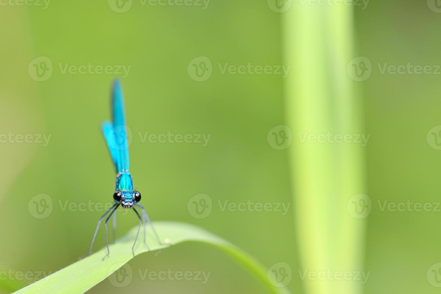 libellula nella foresta foto