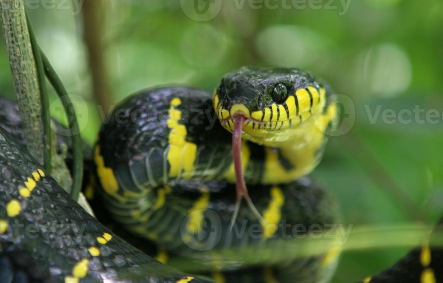 attacco del serpente foto