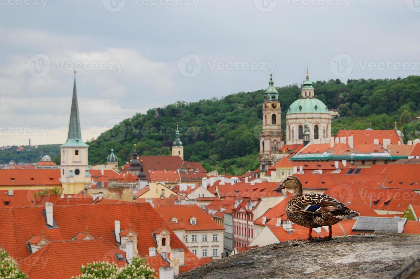 Praga. architettura medievale con un'anatra seduta in primo piano. foto