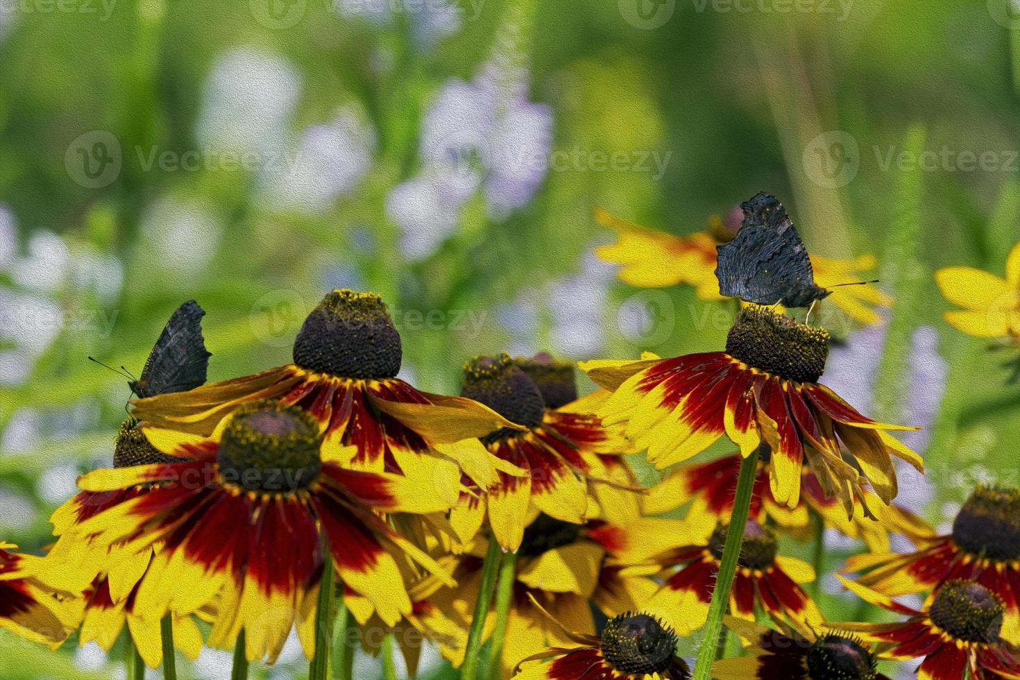 fiori di rudbeckia e farfalla che bevono nettare dalla peta arancio foto