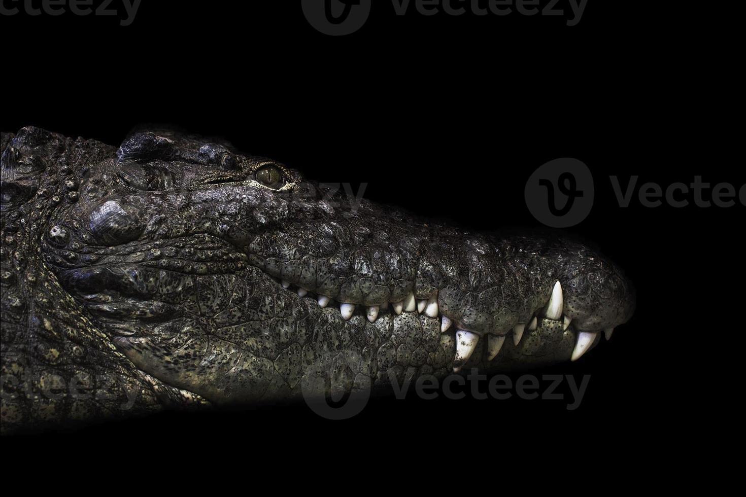 crocodylus niloticus foto